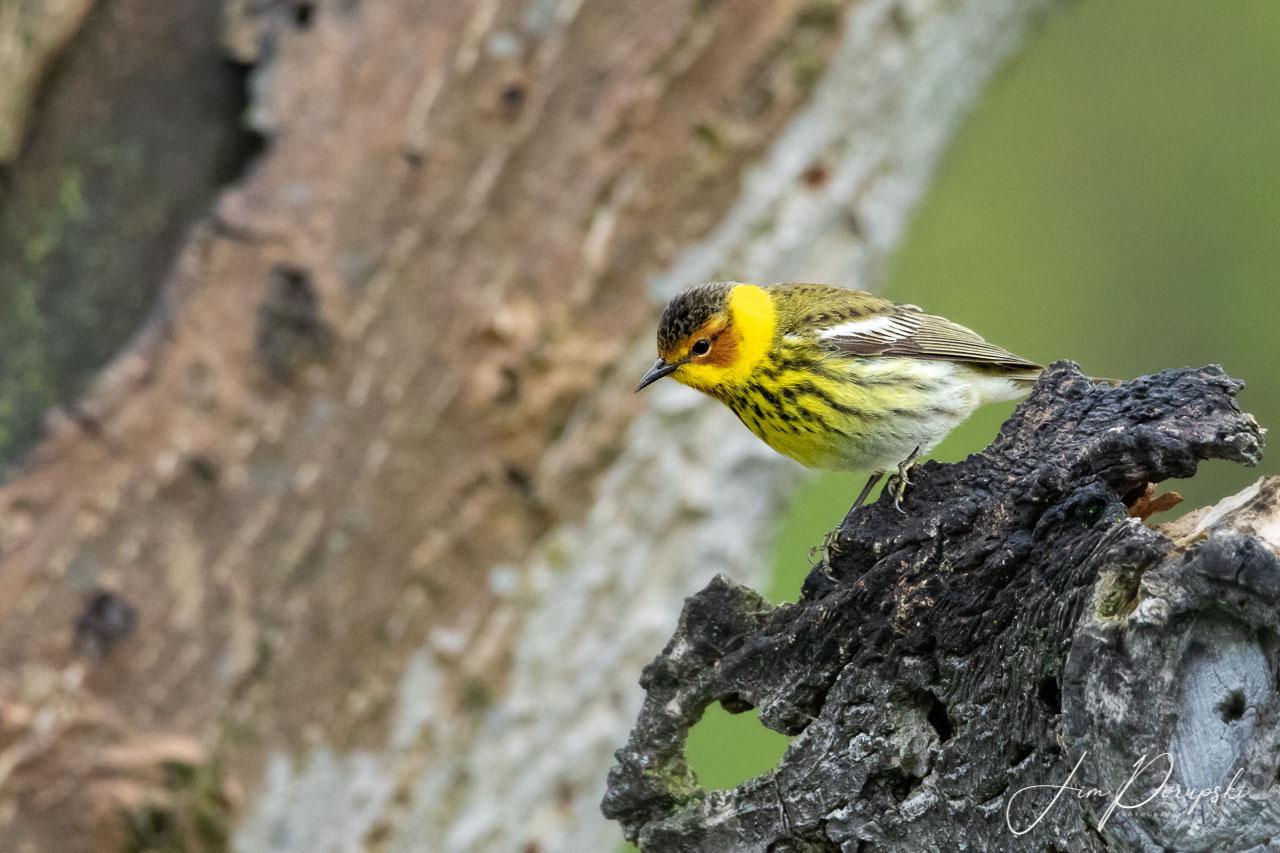 Seasonal birds make a stop (photo)